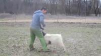 搞笑福利:男子遭到一头小羊攻击,随后的画面太搞笑了,镜头记录全过程!-www.nbitc.com,慧之家