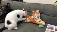 搞笑福利:太搞笑了,广东好友家的猫咪竟然一直给老虎捶背,问题是,那是个玩具,猫咪:给大哥按摩是我的本分-www.nbitc.com,慧之家