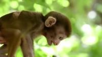 六小时没吃饭,局势严峻小猴能否回到母亲身边
