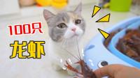 给猫咪100只龙虾,会发生什么?猫:一掌拍死!