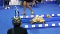 中国北京市小伙:现实版龟兔赛跑,看到最后的结局,你们想到了吗?