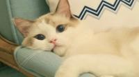 异地漂泊的孩子 为什么爱养猫