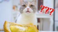 猫咪试吃10种食物,一边咀嚼一边发出呼噜声,看饿了!