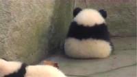 大熊猫坐在墙角哭泣,饲养员靠近一看:我滴个乖乖!