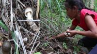 越南小女孩在野外生火烤野蘑菇,惬意悠哉的原始生活,真是羡煞城里人
