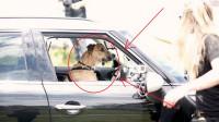 新西兰小狗8星期学会开车,娴熟操作上热搜,网友评论让人笑喷!