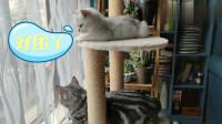 闲成二条的量俩猫咪