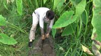 荒废的池塘长满了杂草,小莫扒开草窝挖开一个大洞,果然有大货