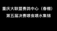 重庆大联盟赛鸽中心春棚第五届决赛喂食喂水集锦