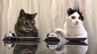 白猫:你他喵自己没有铃铛吗,总按我的?