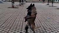 浙江绍兴市大哥:狗狗,走出不一样的步伐,让时间记录你我的爱犬