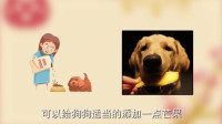 狗狗可以吃芒果吗