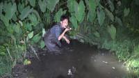 杂草丛生的水沟里黄鳝真多,小莫这次抓过瘾了