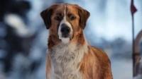 狼王的老大是只狗,野性呼唤回归自然,这样的狗狗你想要吗