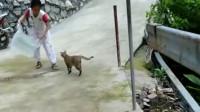 我追半天也没抓着的猫咪,被闺女这么容易就把它搞定了!