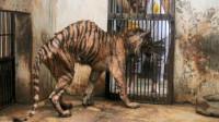 残忍动物园到底有多残忍,看完你就知道了!实在太心痛!