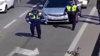 太有爱了,俄罗斯交警帮鸭子一家过马路,真是可爱极了