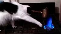 搞笑视频:我家猫要是狠起来 连自己都敢烤了吃