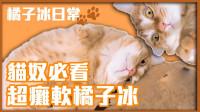 【巧克力】『橘子冰的日常』- 瘫懒橘子冰!大卖萌!各种猫咪萌抓抓OuO
