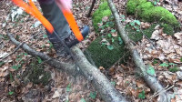 外国大学生发明新型锯木机,不费油不费电,12秒就能锯断一棵树!
