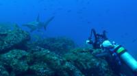 追逐鲨鱼的女孩!《无畏的旅行》带你极限潜水,探寻深海诱惑的秘密!