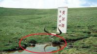 黄河的源头被找到,仅有碗口大小,为什么没人敢靠近?