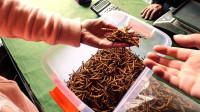 自驾游西藏,一定要找到虫草交易市场,这边的价格好便宜啊