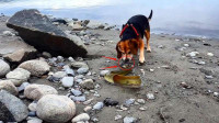 狗狗一口咬住电鳗,下一秒千万憋住别笑,镜头记录全过程