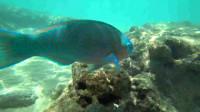 夏威夷瓦胡岛恐龙湾自然保护区,海水清澈见底,很多人都在这冲浪