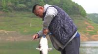遛鱼的时候没感觉这鱼大,抄上来才发现这是米级大鲶鱼