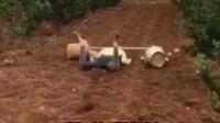 搞笑视频:带闺蜜来果园 她非要体验一下果农的感觉
