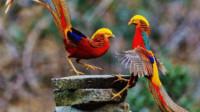 美国的国鸟是鹰,韩国是鹊,中国的国鸟却很少有人知道?