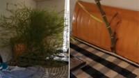 这竹板床是真材实料!男子4个月没回家床头长竹子