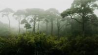 我国在新疆发现目前最早远古森林,距今约3.71亿年