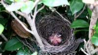超近镜头下的广州生灵秘境: 鸟儿喂食育雏, 用嘴搭巢筑窝