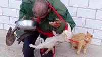 山东流浪老人收养流浪狗流浪猫,随然到处流浪,但小动物们对老人不离不弃!