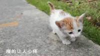 小流浪猫骨瘦如柴,叫的撕心裂肺,看到人就追,好可怜!