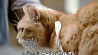 落魄流浪汉因为救了只受伤的小猫,慢慢的自己也因为猫慢慢变好