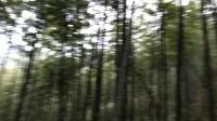【拍客】石溪村的竹林和余枫村的竹林4