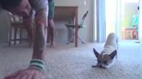 疫情期间禁止外出的意大利人,开始耐心认真地教狗子瑜伽了