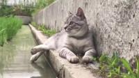 猫爪不能沾到水,哈哈哈哈哈!