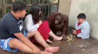 猩猩:来你过来闻闻臭不臭,我反正是受不了!