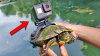 """在鱼和乌龟身上绑一个摄像机,看看""""动物摄影师"""",拍到了啥?"""