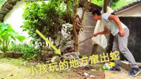 小孩玩的地方躲着一条蛇,撬开乱石堆一看不得了,这下可怎么办呢