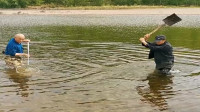 农村大叔来河里抓鱼,发现大鱼直接拍死,真残忍!
