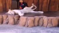 不是亲眼所见不敢相信,动物园看到狮子,谁还不是个宝宝了