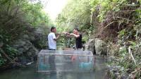 小莫收获65一斤的鱼,全部放在小溪里养,十天看看抓到多少鱼