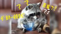 干脆面:我刚才那一碗葡萄呢?难道蒸发了吗?