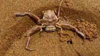 这螃蟹的颜值真是太高了,如果是作为食材的话,感觉多少还是有些屈才了!