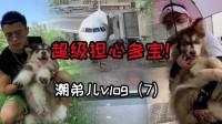 潮弟Vlog:宠物托运事故频发,超担心多宝会不会在飞机上不舒服!